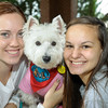 TherapyDogs2016-3