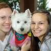 TherapyDogs2016-4