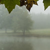 Foggy Early Fall Morning At The Pond