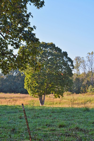 Well, let's start the journey in Walker County! This is a farm located near a church (Dutton Hill Missionary Baptist Church) I've been going to with some friends I know. In these first set of photos I took some pictures of this is huge tree that sits in the middle of a pasture.