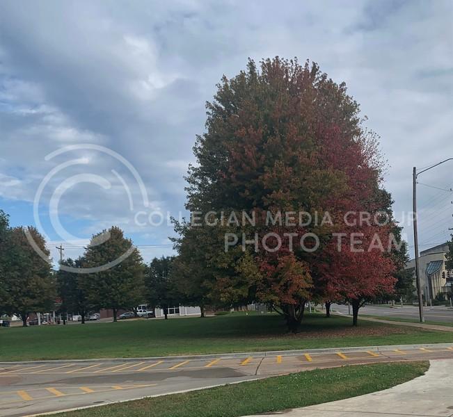 Tree in front of Goodnow (Benjamin Voller | Collegian Media Group)