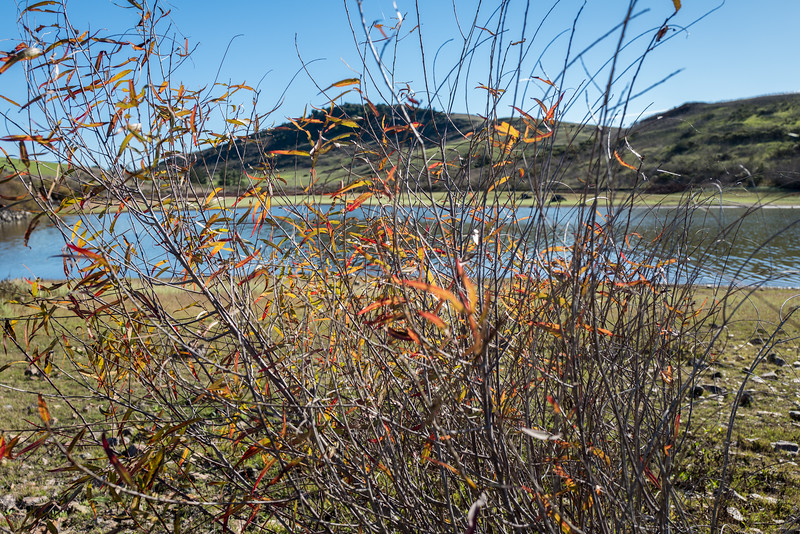 Through the weeds.  Nicasio reservoir. Nicasio, Ca.