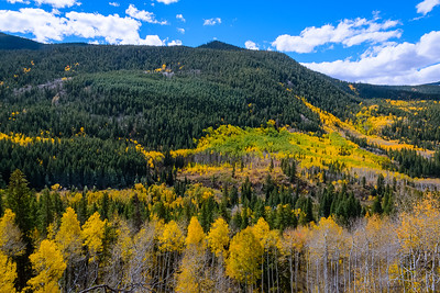 Mixed Forest outside of Aspen Colorado