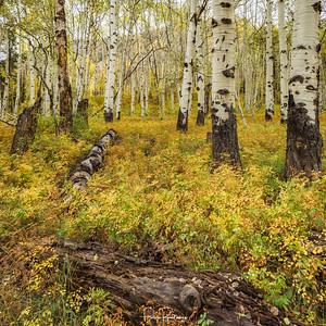 Jill's Forest