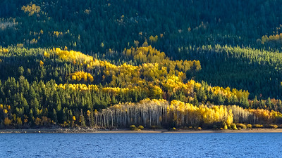 Brightly Lit Aspen on the backside of Twin Lake