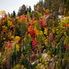 Fall color detail, Saguenay Fjord