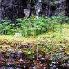 Rainforest, Ile Niapiskau