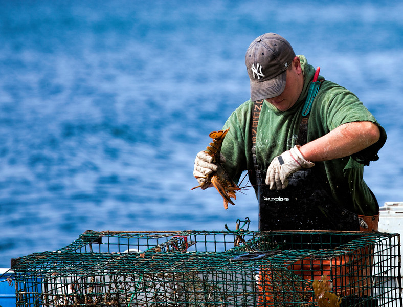 Lobster fishing in Frenchman Bay, Maine