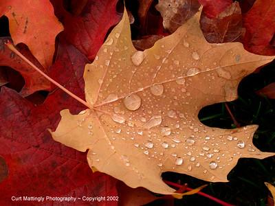 Oregon Fall leaves4
