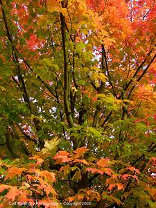 Oregon Fall leaves3