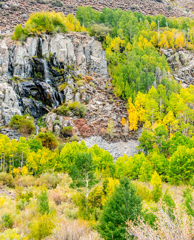 Fall colors along Bishop Creek Road