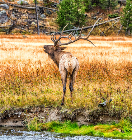 Fall Colors and Yellowstone 2015