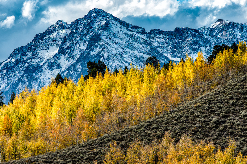 Mt Moran and Aspens