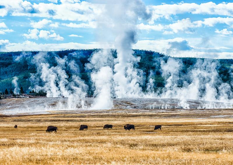 Yellowstone PSA Tours-62