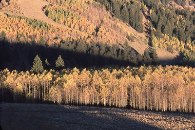 """""""Golden Lines"""" This is on the Bachelor Loop Rd above Creede, Colorado."""