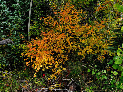 Fall colors in the brush also