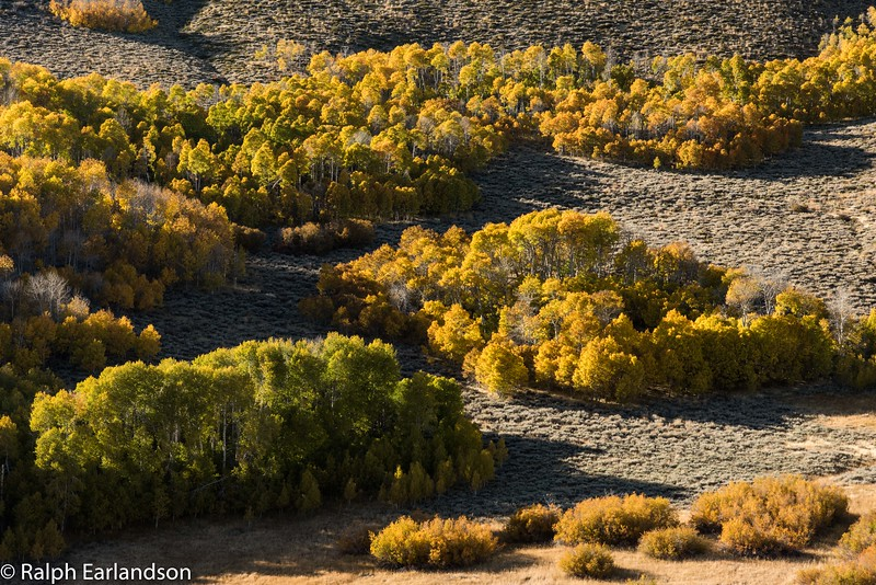 Fall colors seen from US Highway 395 near Mono Lake.