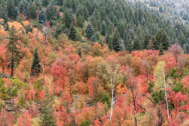 Competing Seasons in Farmington Canyon