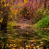 Fall Swirl in Huntsville, Utah