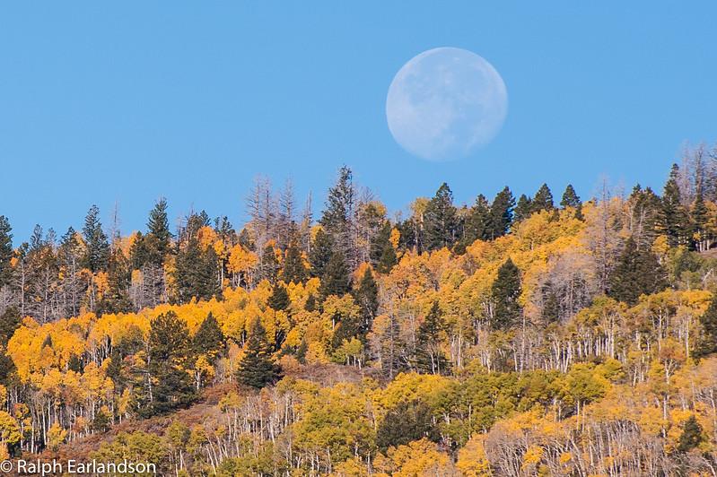 Moon setting over golden aspens, Grand Staircase Escalante National Monument, Utah.