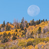 Moon setting over golden aspens, Grand Staircase Escalante National Monument, Utah.