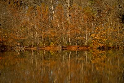 Reflecting on Boston Pond