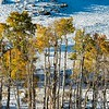 Aspens in fall color in snow along Utah Highway 12.