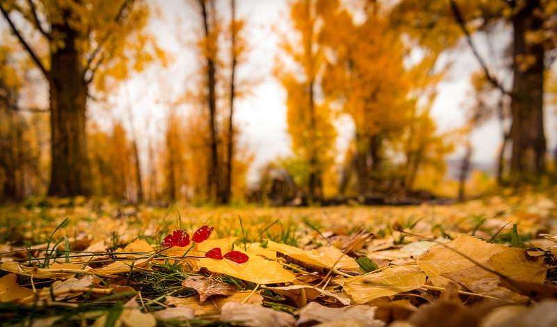 Simply Fall in Farmington