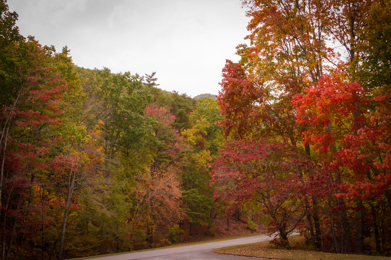 Foothills Parkway Color in Tennessee