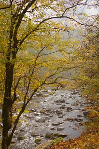 Foggy Babbling Brook