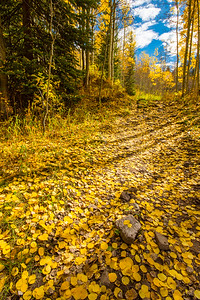 Yellow Leaf Road