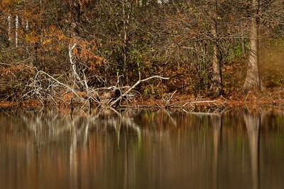 Boston Pond