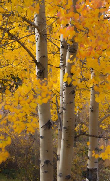 """Golden Autumn"""