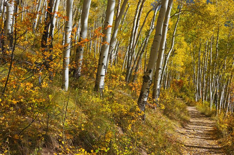 Near Telluride, Colorado