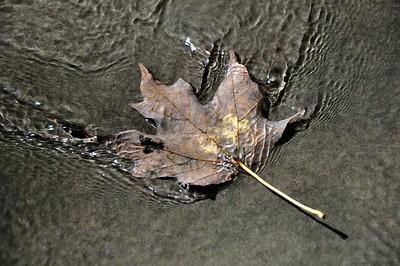 Leaf Ripples