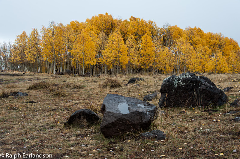 Aspens in fall color along Utah Highway 12, with boulders in the foreground.