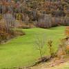 A doe grazes alone in a meadow.