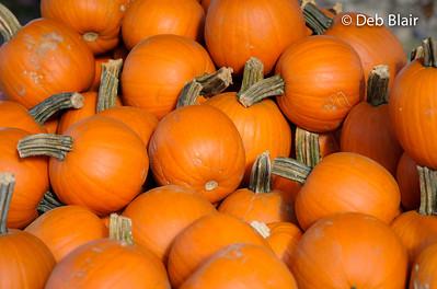 Pumpkins in Hollis