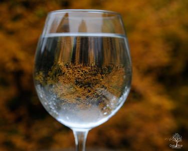 Foliage through a glass