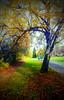 Fall Foliage in Green Lake, Seattle,  Washington