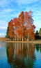 Fall Foliage in Green Lake, Seattle,  Washington