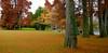Fall Foliage in Green Lake Park,  Seattle,  Washington