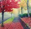 Fall Foliage in Puyallup,  Washington