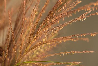 Fall Grasses 9.27.16