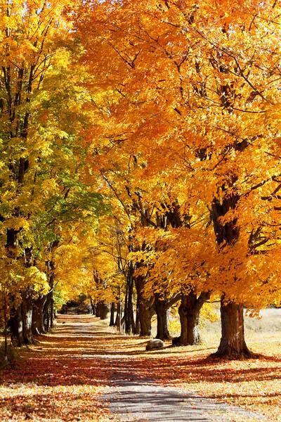 Fall Path Of Beauty
