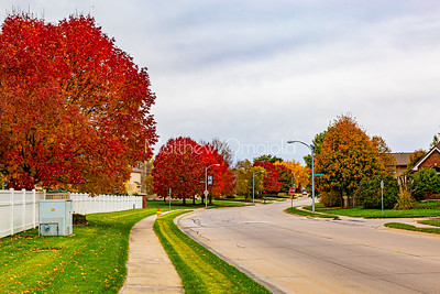 Fall colors on a street in a neighborhood; beautiful foliage with leaves on manicured lawn.