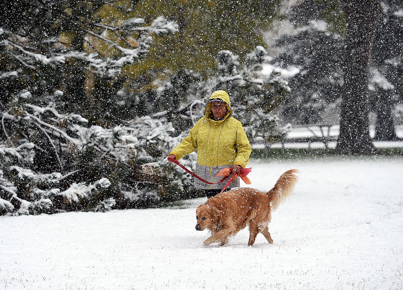"Linda Inglehart walks her 6 year-old golden retiever, Daisy, through the snow Monday, Oct. 9, 2017, at North Lake Park in Loveland. Talking about the fall snow Inglehart said ""It's beautiful. The best time of year in Colorado."" (Photo by Jenny Sparks/Loveland Reporter-Herald)"