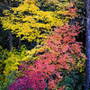 Two Toned Fall