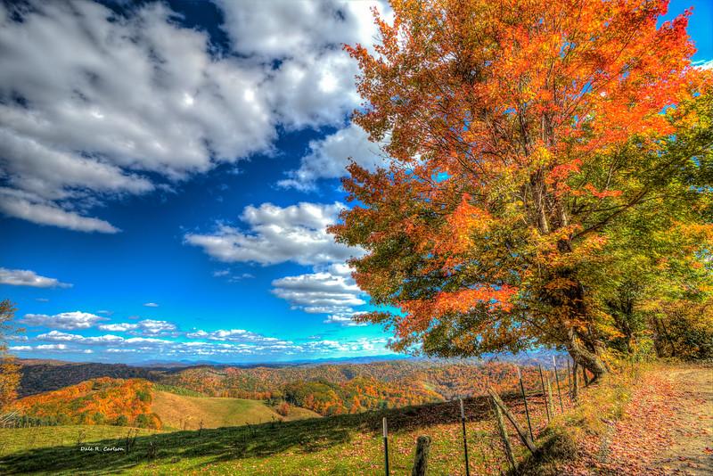 Autumn on the Windfall