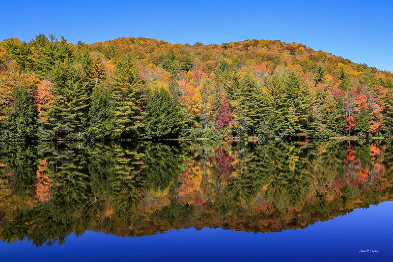 Beartree Reflection